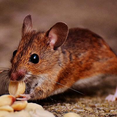 servicios profesionales control de plagas comunidades de propietarios ratas vecindia - Empresa Control de Plagas en Jódar