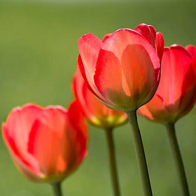 servicios profesionales jardineria para comunidades de propietarios amapolas vecindia - Jardinería en Las Ventas De Retamosa para Comunidades de Propietarios