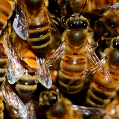 servicios profesionales servicios de control de plagas abejas comunidades de propietarios vecindia - Empresa Control de Plagas en Palencia