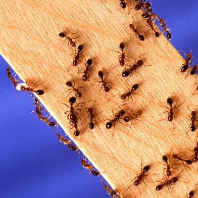 servicios profesionales servicios de control de plagas comunidades de propietarios hormigas vecindia - Empresa Control de Plagas en Palencia