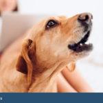 como denunciar a un vecino por ruido de perros 150x150 | Abogados Comunidades Propietarios Ermua