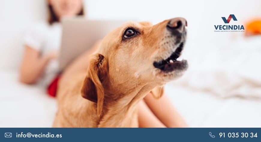 Cómo denunciar a un vecino por ruido de perros: ¿cuál es el procedimiento?